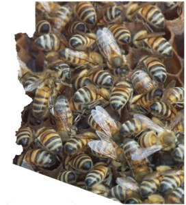 Swarms Of Bees Can Attack In Arizona And Are Dangerous