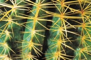 Closeup view of a cactus