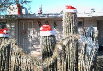 christmas in arizona